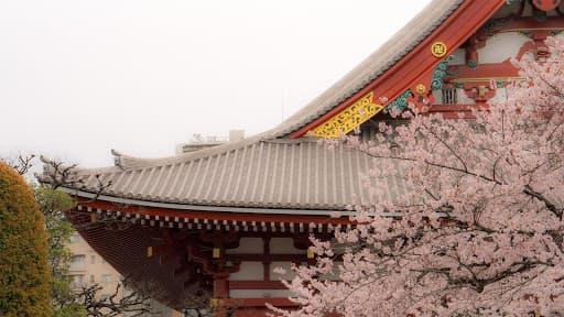 Les lieux insolites de Tokyo : un temple avec des cerisiers
