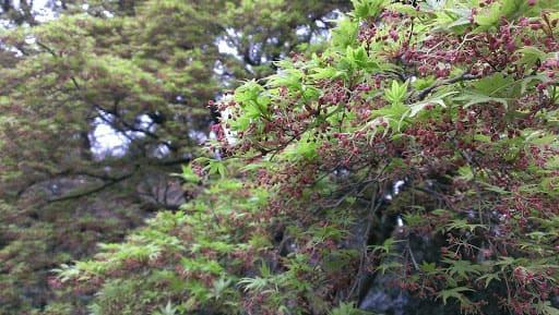 Activité à Tokyo : Visitez le parc Shinjuku Gyoen